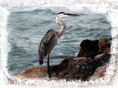 Heron's Ocean Rocks by Barbara Chichester