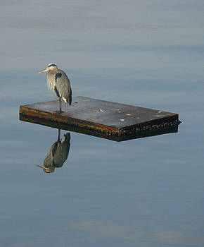 Heron's Reflection by Lydia L Kramer