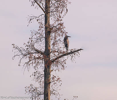 Herons Watch  by Kim Loftis