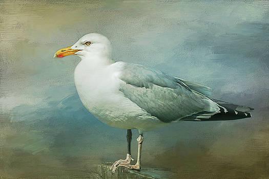 Herring Gull by Cindi Ressler