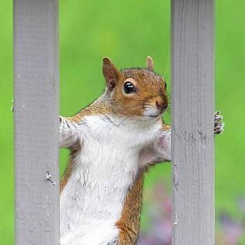Squirrel on the Porch by Randy Bayne