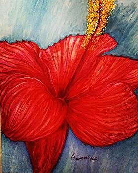 Hibiscus by Arturo Cisneros