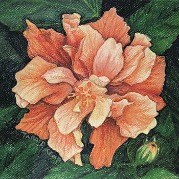 Hibiscus Couture by Tara D Kemp