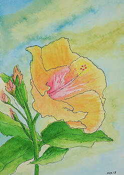 Hibiscus by Cynthia Schoeppel