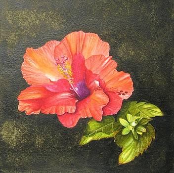Hibiscus Dance in the Sun by Elizabeth H Tudor