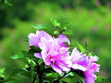 Hibiscus Fleur by Art By ONYX
