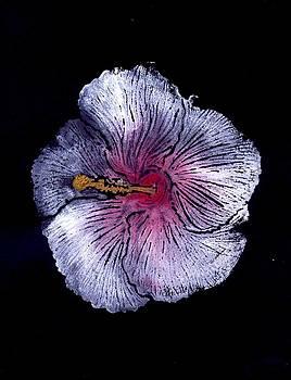 Hibiscus Flower by Ana Bikic