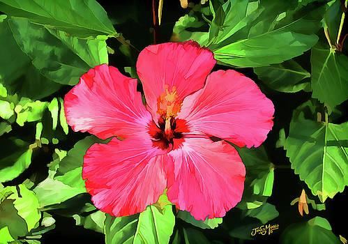 Hibiscus Flower by James  Mingo
