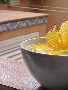 Hibiscus in a Bowl by Peter J Robinson Jr
