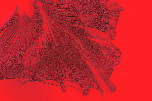 Hibiscus in Depth by Larry Jost