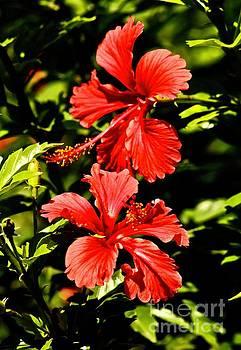 Hibiscus in Rhythm by Craig Wood