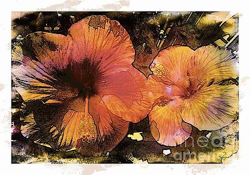 Hibiscus in Sunlight by Barbara Griffin