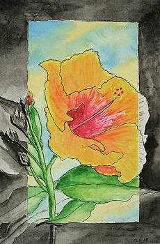Hibiscus In Transition by Cynthia Schoeppel