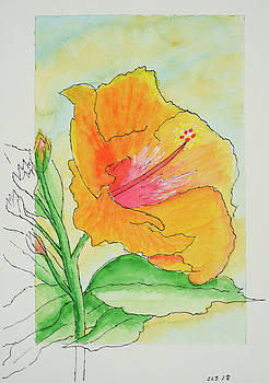 Hibiscus Interrupted by Cynthia Schoeppel
