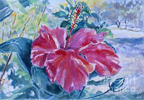 Hibiscus by Jan Bennicoff