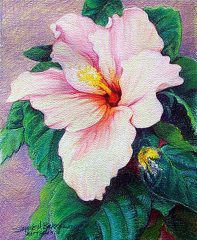 Hibiscus Light by Suzanne Berry