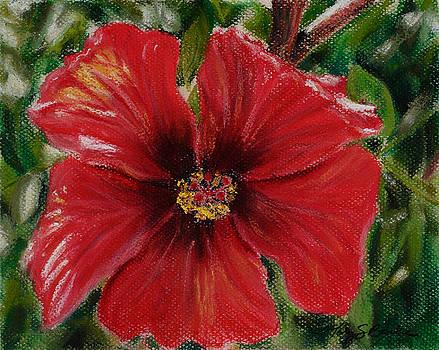Mary Benke - Hibiscus