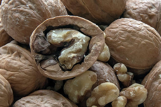 Hickory Nuts by Jayne Gohr