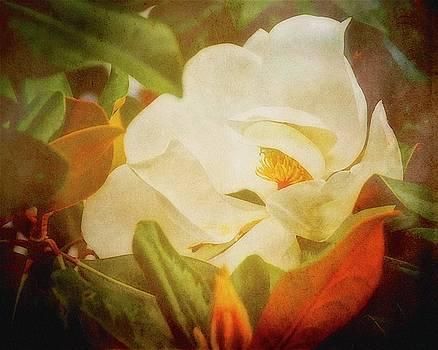 Hidden Beauty, Magnolia Flower by Flying Z Photography by Zayne Diamond