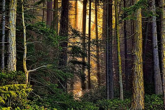Hidden in the Forest by Rick Lawler