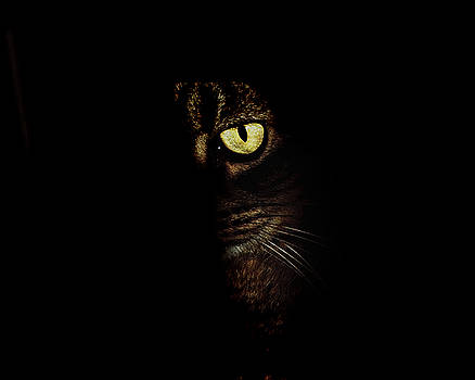 Andee Design - Hidden Kitty Under The Cover Of Darkness