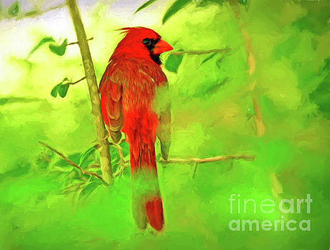 Hiding Behind the Leaves - Male Cardinal Art by Kerri Farley