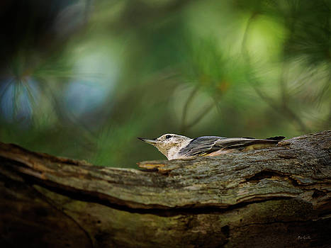 Hiding From The Hawk by Bob Orsillo