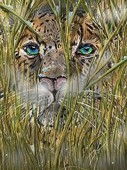 Hiding in the grass by Darren Cannell