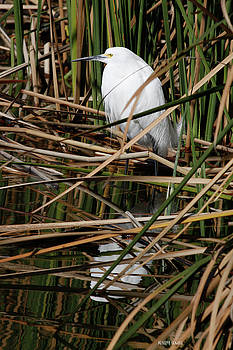 Deborah Benoit - Hiding In The Reeds