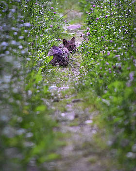 Hiding on the Trail by Jeremy Clinard