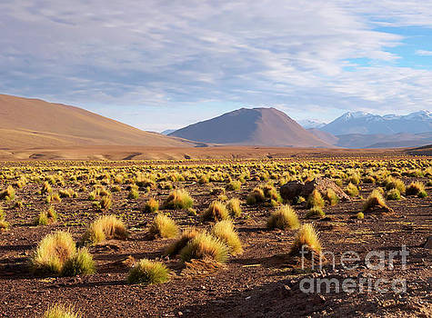 High altitude vegetation and foothills of the Andes Mountains by Louise Heusinkveld
