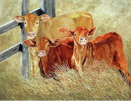 High Class Cows by Dana Spring Parish