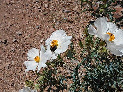 High Desert Spring by Wayne Ligon