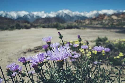 Margaret Pitcher - High Desert Wildflowers