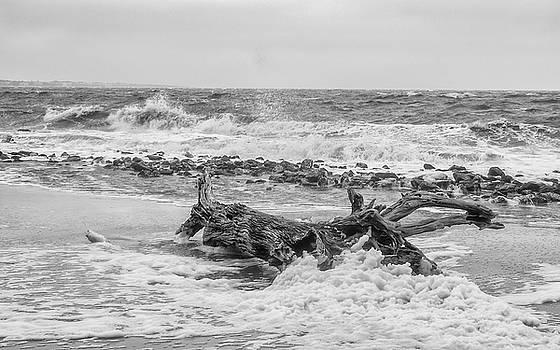 Andrew Wilson - High Wind On Driftwood Beach
