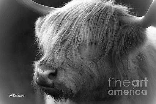 Highland Cattle Two by Veronica Batterson
