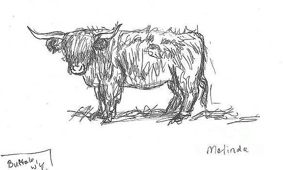 Highland Cow field sketch by Dawn Senior-Trask