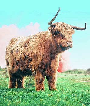 Highland Cow by Uma Gokhale