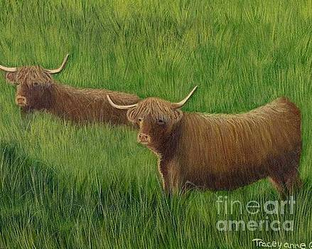 Highland cows by Tracey Goodwin