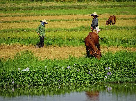 Highland Farmers by Paki O'Meara