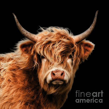 Highland Moo by Linsey Williams