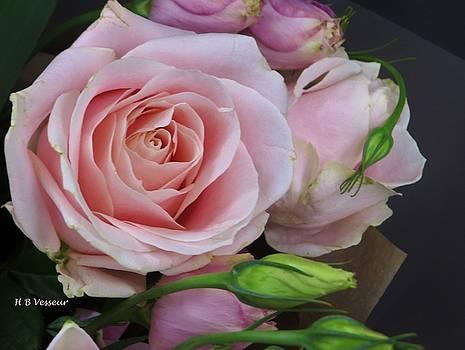 Highland Rose by B Vesseur