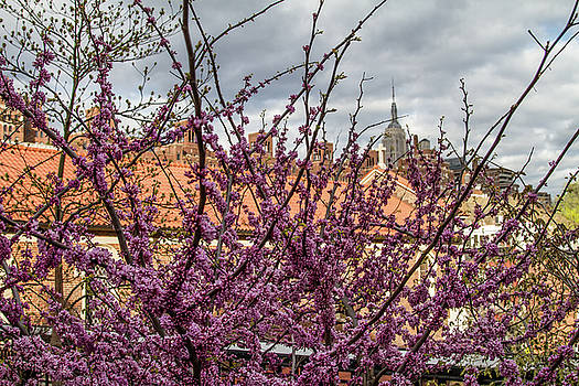 Highline Flowers by Robert J Caputo