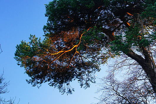 Highlit Branch by Nik Watt