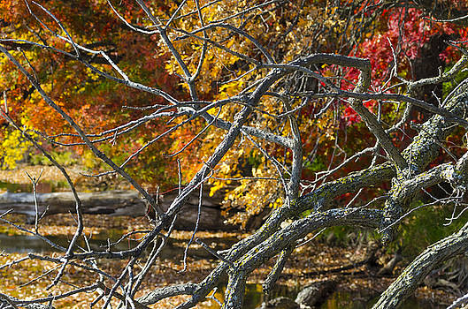 Highly Textured Branches Against Autumn Trees by Lynn Hansen