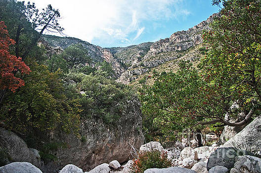 Hiking Guadalupe by Lisa Holmgreen