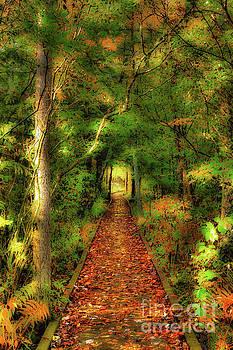 Hiking in Paradise - West Virginia AP by Dan Carmichael