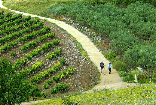 Hiking past Vineyards by Mike Shaw