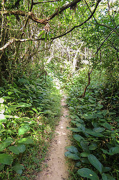 Hiking path in the Atlantic Forest by Helissa Grundemann