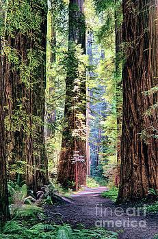 Dan Carmichael - Hiking Through Three Redwood Trees